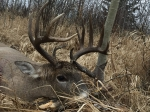 Northern Whitetail Outfitters Deer hunting