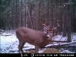 Trails End Outfitters Deer hunting